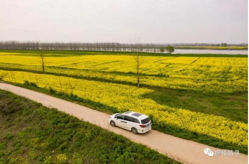 不在婺源不在汉中,这才是本月最佳菜花线丨廖佳风景线